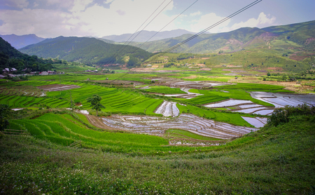 frequented: Terraced rice field at summer day in Ha Giang, Northern Vietnam. Ha Giang province in northern Vietnam is less frequented by tourists.