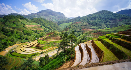 Terraced rice field at summer in Ha Giang, Vietnam. Ha Giang impresses visitors with its high karst plateau, steep hills, winding roads and ethnic diversity.
