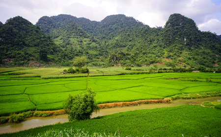 Terraced rice field with the river in Sapa, Northern Vietnam.