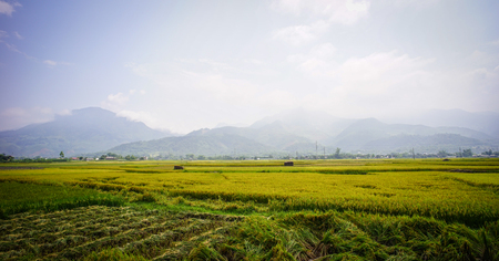 Rice field at summer day in Ha Giang, Northern Vietnam. Ha Giang province in northern Vietnam is less frequented by tourists. Stock Photo