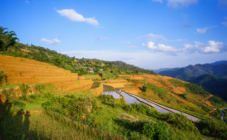 Terraced rice field at sunny day in Lao Cai, Vietnam. Lao Cai province has rich mineral resources, 30 types have been identified with good reserves. Stock Photo