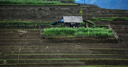 Terrasvormig padieveld met klein huis in Sapa Township in Lao Cai Province, Vietnam. De terrasvormige rijstvelden in de meeste berggebieden in het noorden van Vietnam.
