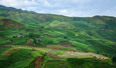 Terraced rice field in Sapa Township, Northern Vietnam. Sapa is located in northwest Vietnam, 380 km northwest of Hanoi close to the border with China.