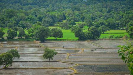 Rice field in Mekong Delta, Vietnam. The Mekong delta region encompasses a large portion of southwestern Vietnam of over 40,500 square kilometres.