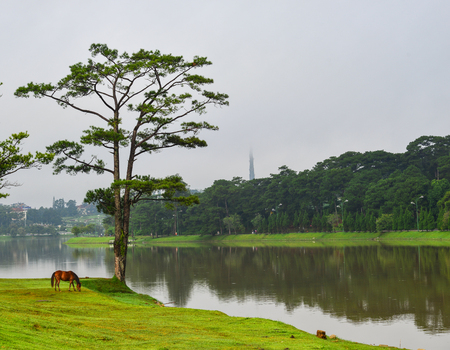 summerhouse: Lake scenery with a horse in Dalat, Vietnam. Da Lat is a popular tourist destination located 1500m above sea level on the Langbian Plateau.