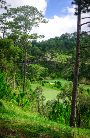 Pine tree forest in Dalat, Vietnam. Da Lat is located 1500 m above sea level on the Langbian Plateau.