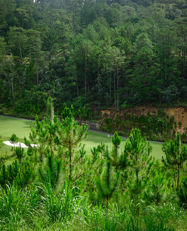Forest scenery in Dalat, Vietnam. Da Lat is located 1500 m above sea level on the Langbian Plateau.