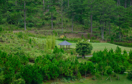 Pine forest in Dalat, Vietnam. Da Lat is located 1500 m above sea level on the Langbian Plateau.