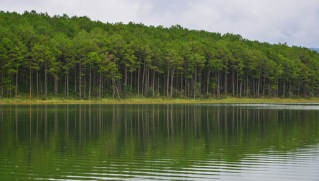 summerhouse: Lake scenery with pine forest at summer in Dalat, Vietnam. Da Lat is a popular tourist destination, located 1500m above sea level on the Langbian Plateau.