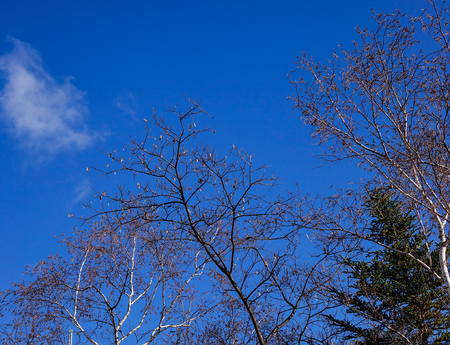 Winter trees under blue sky at sunny day in national park
