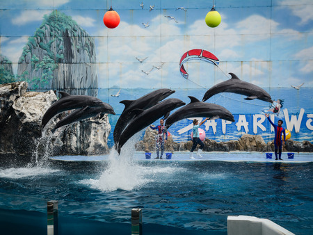 Bangkok, Thailand - Jun 16, 2016. Dolphins are ready to impress the audience with a specular show at Safari World in Bangkok, Thailand. 版權商用圖片 - 86342270
