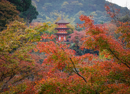 Autumn trees with the temple in Kyoto Japan. Kyoto served as Japan capital and the emperor residence from 794 until 1868.
