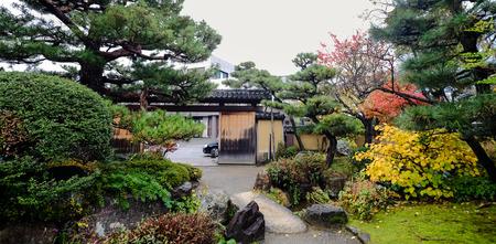 momiji: Traditional garden in Kyoto, Japan.