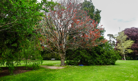 Beautiful trees at botanic garden in the central city of Christchurch, New Zealand. Stock Photo