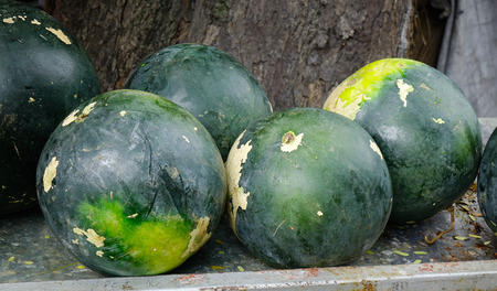 retail scene: Close-up of watermelon for sale at market in Blue Bay, Mauritius.