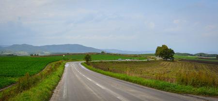 Beautiful road with green fields in Biei Township, Hokkaido, Japan. Stock Photo