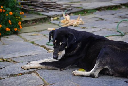 Black dog lying on rural road in Grandruk, Nepal.