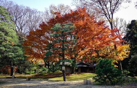 Scenery of Rikugien Garden in Tokyo, Japan. Rikugien Garden (Rikugi-en) is a Tokyo metropolitan park in Bunkyo-ku. Editorial