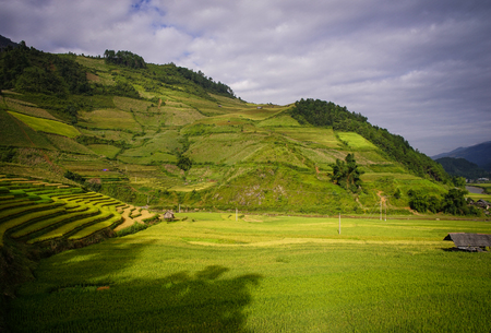 Terraced rice field in Mu Cang Chai, Vietnam. Mu Cang Chai is famous for its 700 hectares of terraced rice fields and has become a popular destination.