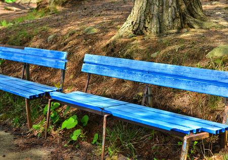 Wooden bench at botanic garden near Towada Lake in Tohoku, Japan.
