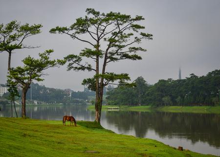 ハイランド、ベトナムで湖の近くに草に馬立っています。