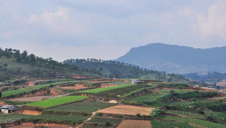 Gemüsefelder in Dalat, Vietnam. Da Lat liegt 1500 m über dem Meeresspiegel auf dem Langbian-Plateau.