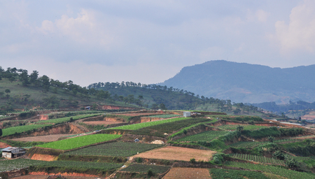 Vegetable fields in Dalat, Vietnam. Da Lat is located 1500 m above sea level on the Langbian Plateau.