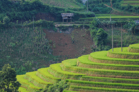 Terraced rice field at sunny day in Ha Giang Province, Northern Vietnam. Stock Photo