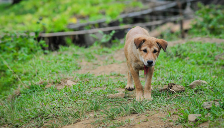 A dog looking at camera in Sapa, Northern Vietnam.