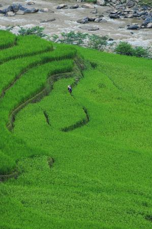 Terraced rice field at sunny day in Yen Bai, Northern Vietnam.