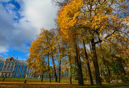 Catherine Palace with autumn garden in Saint Petersburg, Russia. The Palace is a historical and compositional center of the palace-and-park ensemble.