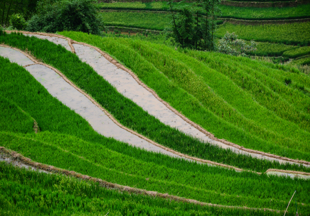 Terraced rice field at summer day in Sapa Township, Lao Cai Province, Vietnam.