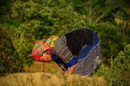 Sapa, Vietnam - May 28, 2016. A woman on rice field in Sapa, Vietnam. Sapa is a frontier township and capital of Sa Pa District in Lao Cai Province in north-west Vietnam.