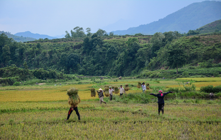 Sapa, Vietnam - May 29, 2016. People working on the rice field in Sa Pa, Vietnam. Sapa is a frontier township and capital of Lao Cai Province in north-west Vietnam. 新聞圖片