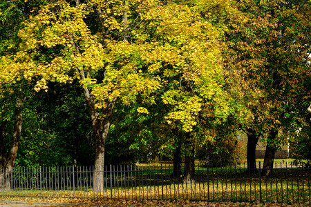 Autumn trees at the city park in Vyborg, Russia. 免版税图像