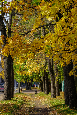 Vyborg, Russia - Oct 6, 2016. Row of trees at autumn in Vyborg, Russia. Vyborg stands at the head of Vyborg Bay of the Gulf of Finland, 113 km northwest of St. Petersburg.