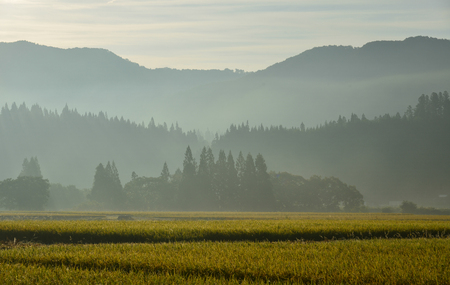 Rice field at sunrise in Akita, Japan. Rice production is important to the food supply in Japan. Stock Photo