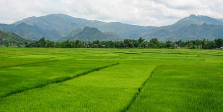 Rice field at summer in Lai Chau Province, Northern Vietnam. Imagens