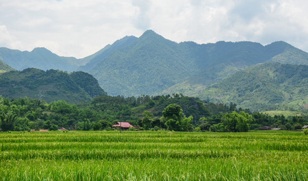 Rice field at sunny day in Lai Chau Province, Northern Vietnam.