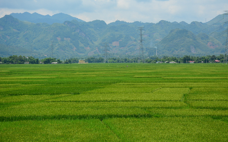Rice field at summer day in Hoa Binh Province, Northern Vietnam.