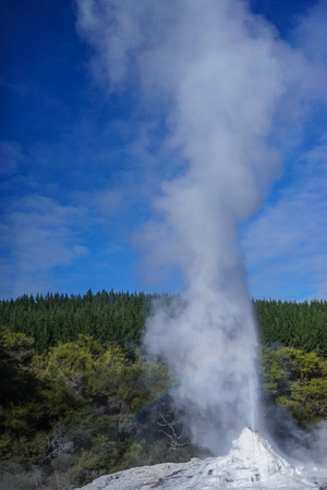 Lady Knox Geyser at sunny day on the North Island in New Zealand.