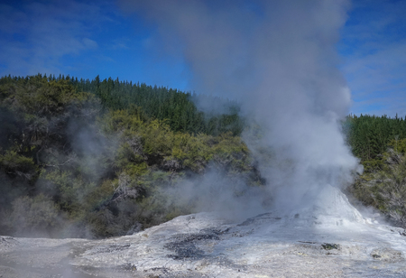 Lady Knox Geyser at summer day on the North Island in New Zealand.