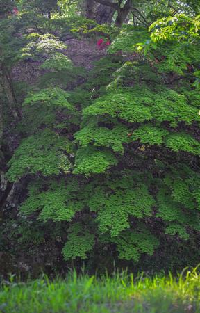 Green trees at botanic garden in summer day.