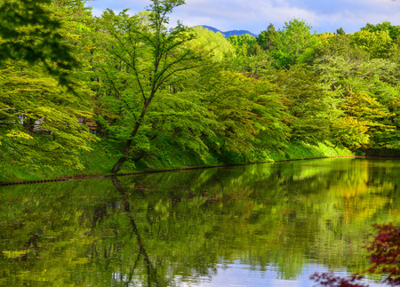 Green trees with a pond in summer day. Stock Photo