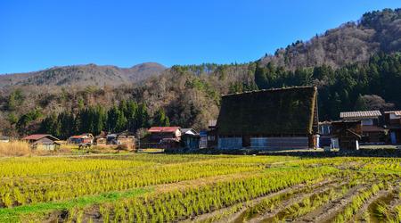 Shirakawa-go Historic Village with green rice field at sunny day in Gifu, Japan.