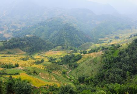 Terraced rice field in Lai Chau Province, Northern Vietnam.
