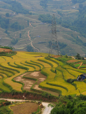 Terraced rice field at autumn in Sapa, Vietnam. Terraced rice fields can be cultivated with only one crop per year, normally from June to October. 写真素材