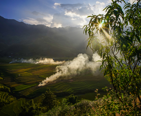 Harvesting rice on the field at sunset in Tu Le Township, Vietnam.