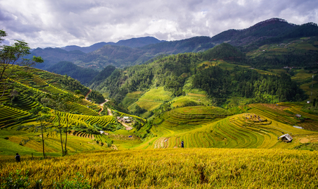 ベトナム北部マイチャウタウンシップの山々の棚田。