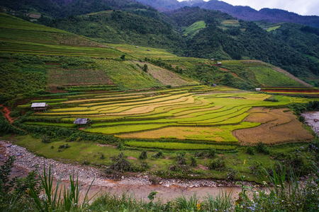 Terraced rice field in Mu Cang Chai Town, Northern Vietnam.